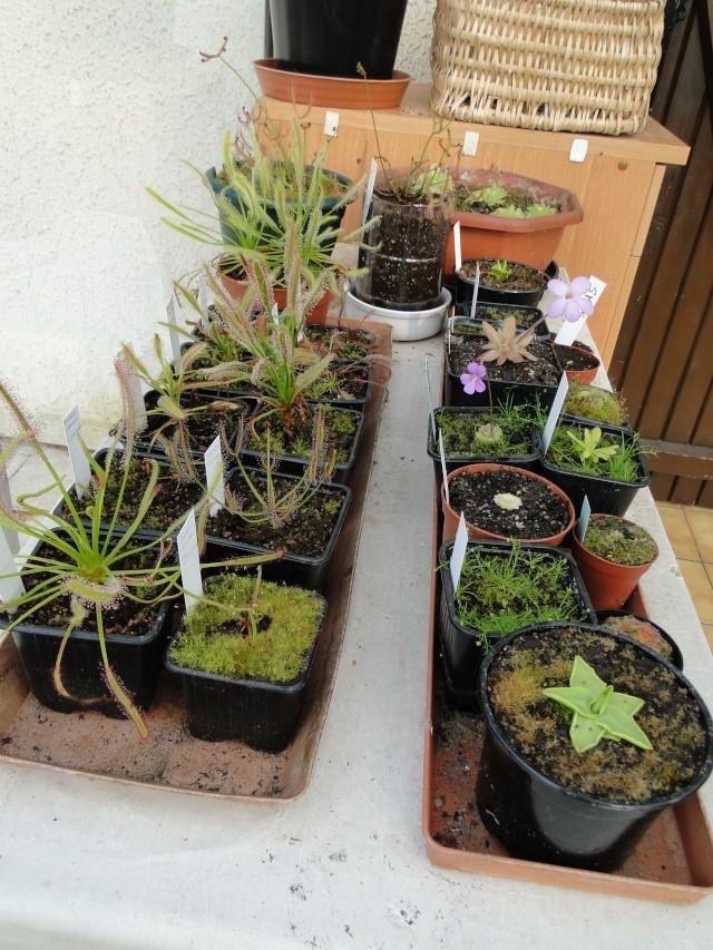 Mes plantes. (ça se réveille aussi du côté de Nantes...) Dsc01115