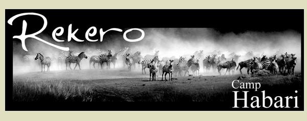 Rekero - News and Community Camp_h10