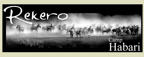 Rekero - News and Community Camp_h11