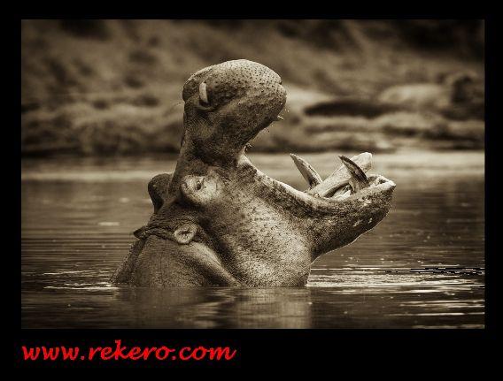 Rekero - News and Community Hippor10