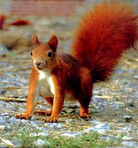 bonne fete a l ecureuil de l agressif car tuning Ecureu10