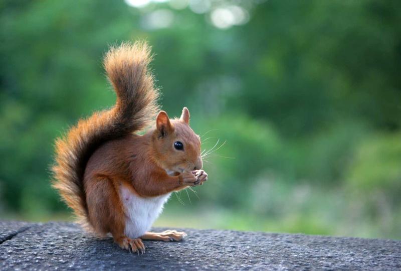 bonne fete a l ecureuil de l agressif car tuning Fond_e11