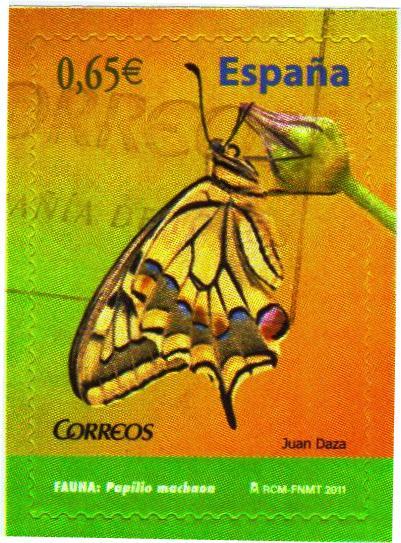 Schmetterlinge - Seite 2 Esp10