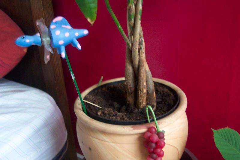 Décorez vos plantes d'intérieur ! Photo_38