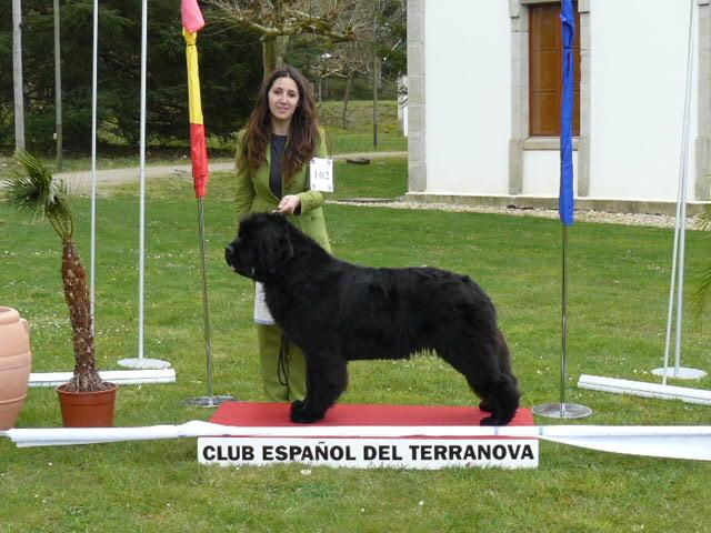 Monografica CETR 28-29 Marzo 2009 Ganado10