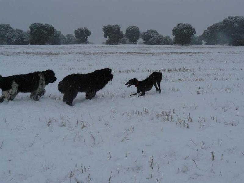 ¡¡INICIAMOS TEMPORADA 2009 DE ENTRENAMIENTOS!! Nieve011