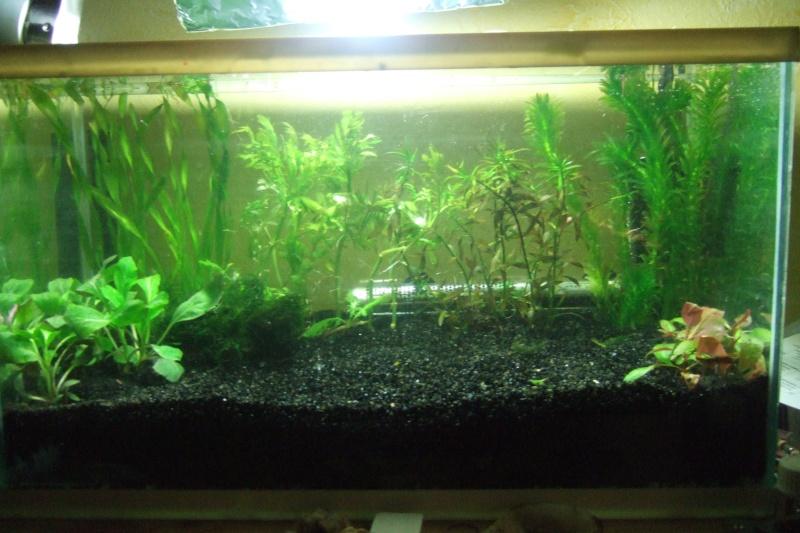 Mes aquariums - Page 2 Dscf3019