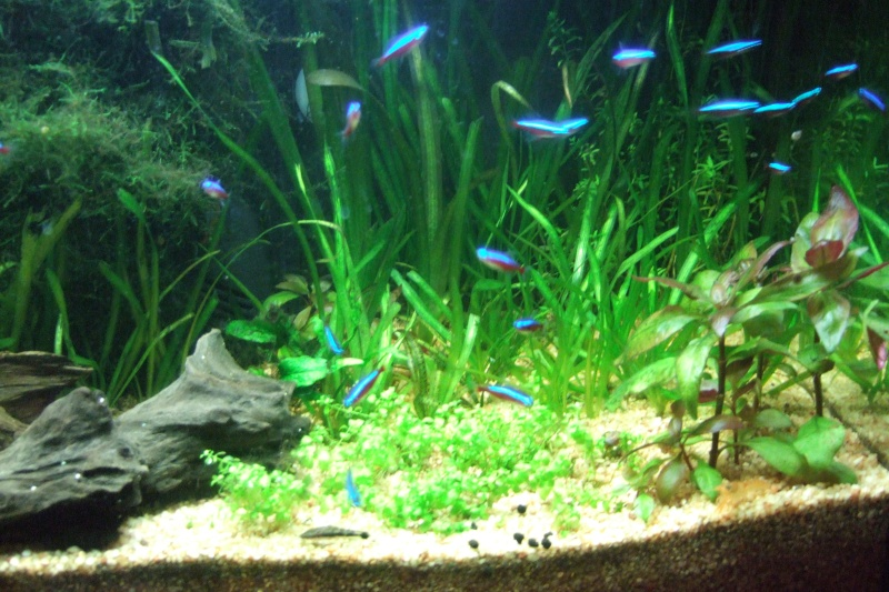 Mes aquariums - Page 2 Dscf3023