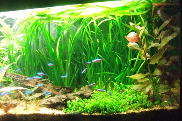 Mes aquariums - Page 6 Dscf3318