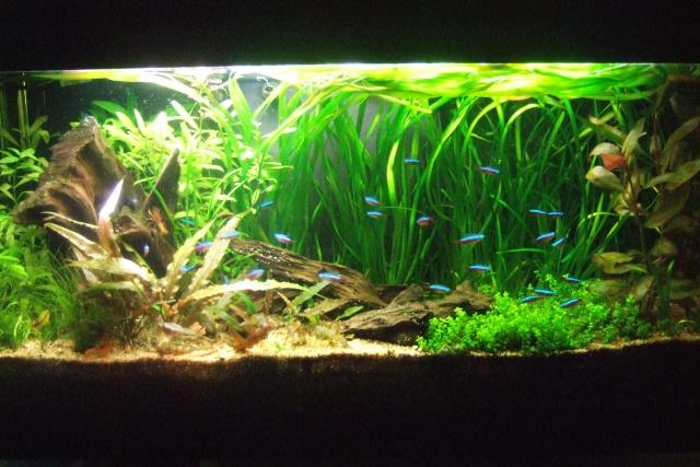 Mes aquariums - Page 6 Dscf3319