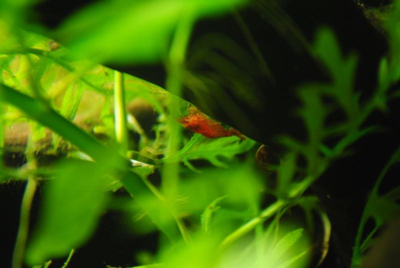 Mon 300L amazonien - Page 2 300_l_13
