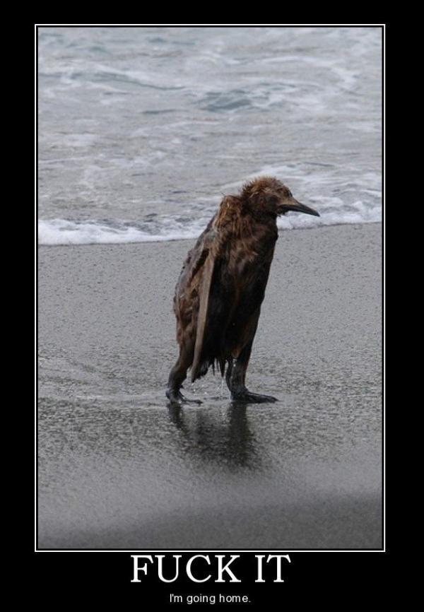 Lol Penguin goin Home.. Motiva10