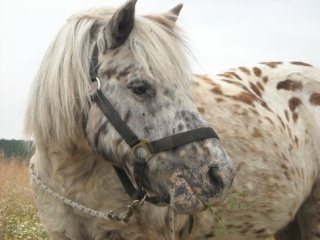 Equitation Loisirs