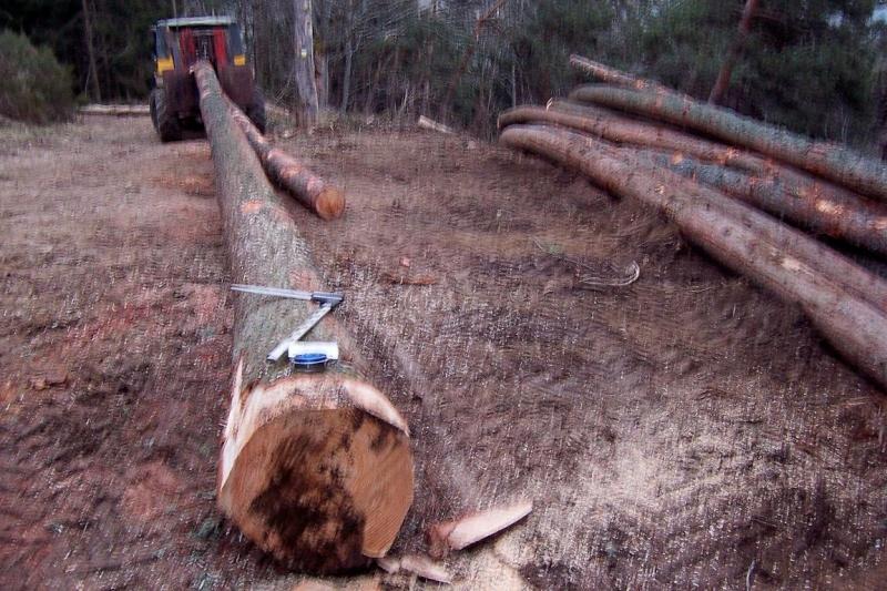 voici l' ancien 406 forestier de eric07 Eric_010