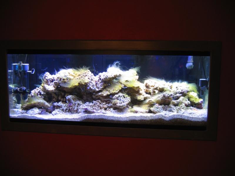 400 vers un 750 Litres recifal eclairage LED démarrage  - Page 4 Photo_10