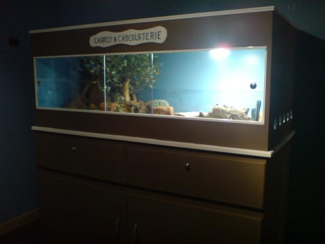 Mon terrarium fait avec un ami ébéniste Dsc01725