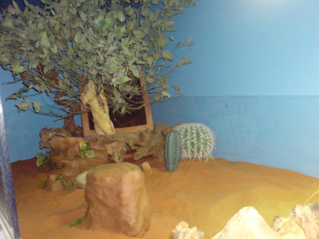 Mon terrarium fait avec un ami ébéniste Dsc01726