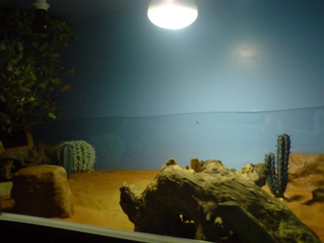 Mon terrarium fait avec un ami ébéniste Dsc01727