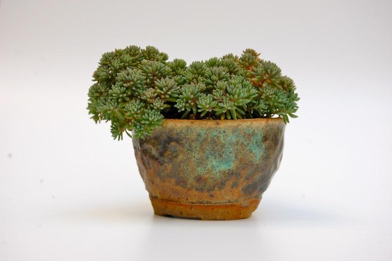 how do your kusamono grow? Dsc_0014
