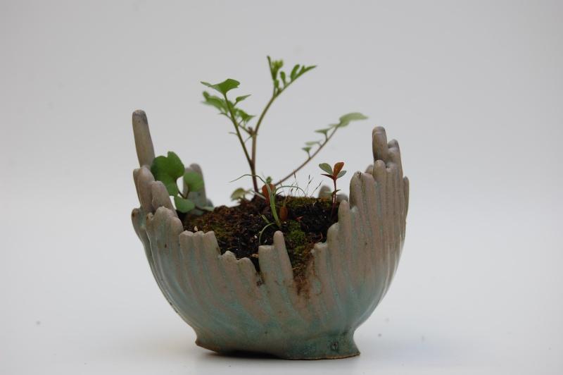 how do your kusamono grow? Dsc_0015