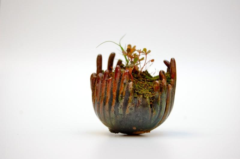 how do your kusamono grow? Dsc_0016