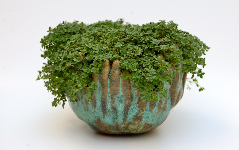how do your kusamono grow? Dsc_0017
