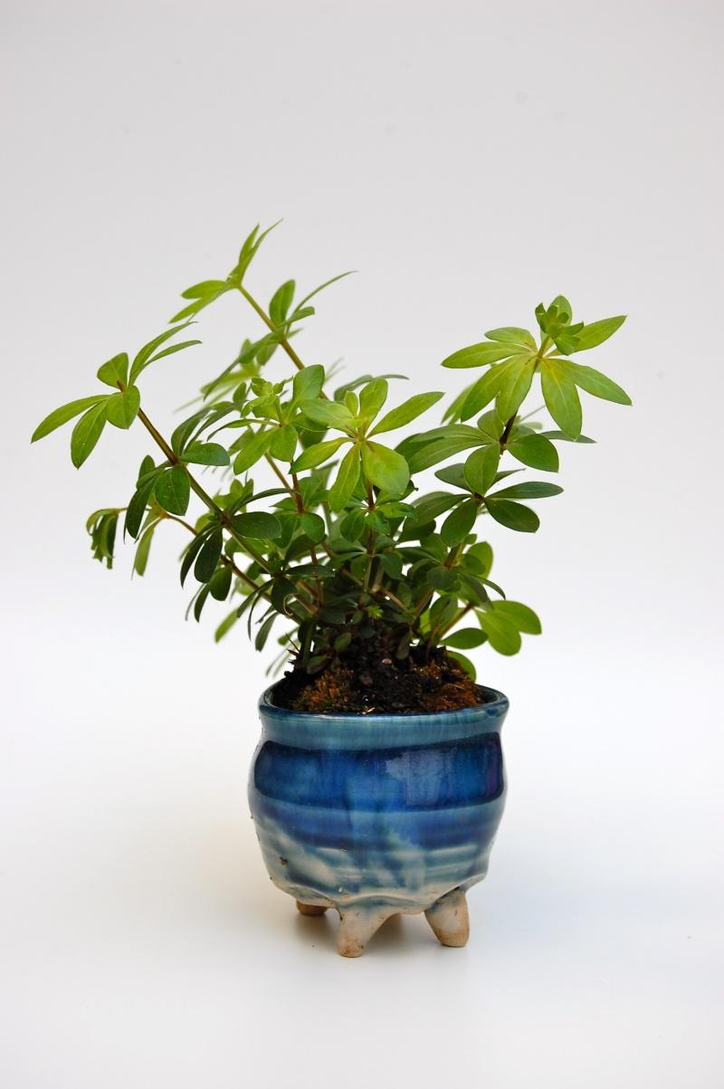 how do your kusamono grow? Dsc_0019