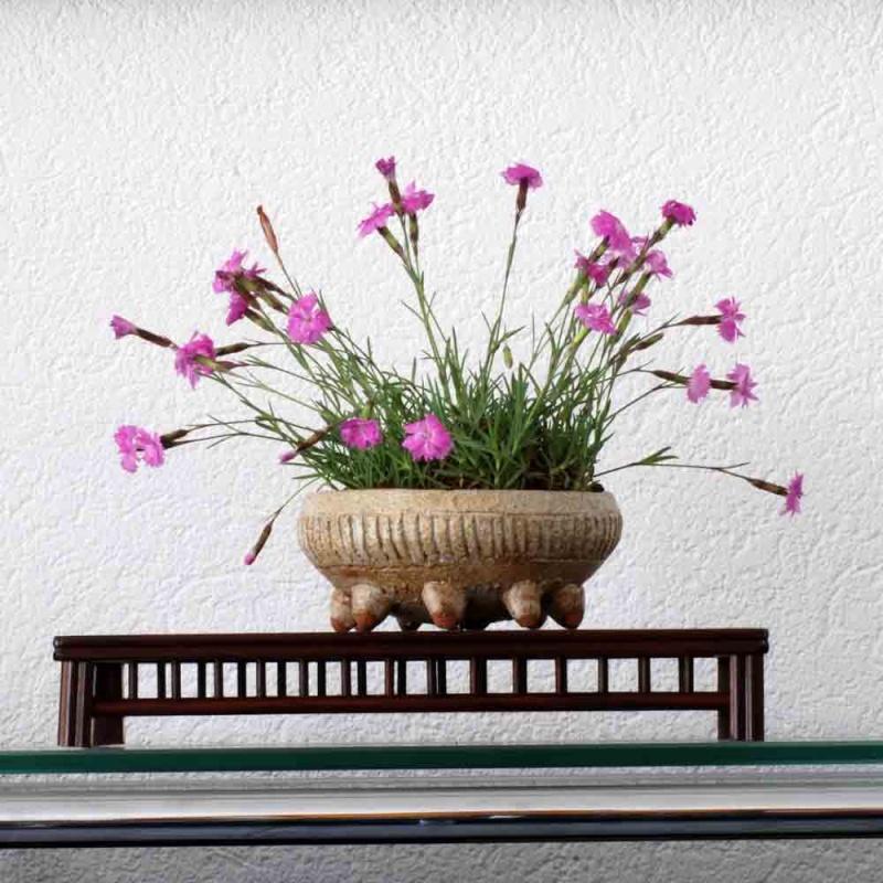 how do your kusamono grow? Grasne11