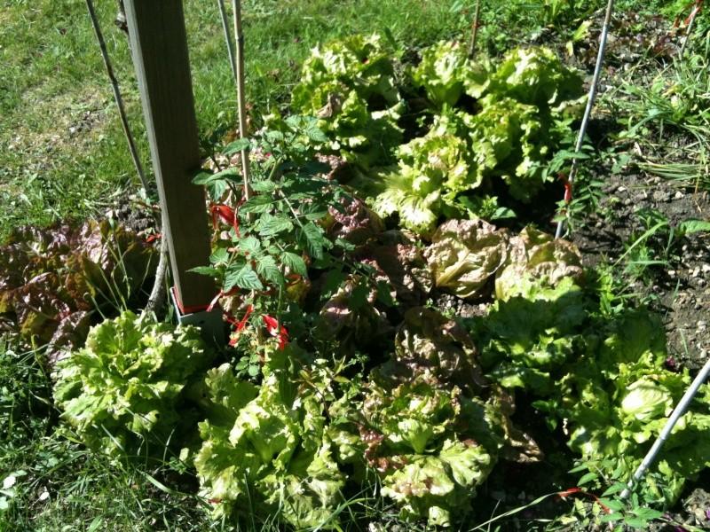 Faire son jardin potager 2010 - 2011 - Page 3 Photo_28