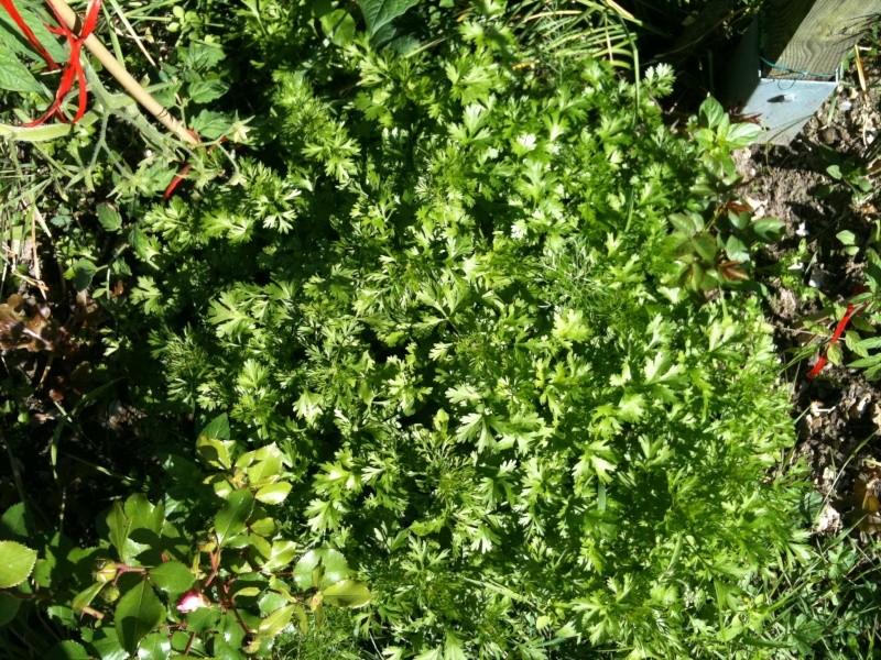 Faire son jardin potager 2010 - 2011 - Page 3 Photo_29