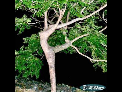 Sculptures naturelles ou œuvres de la nature 66caa712