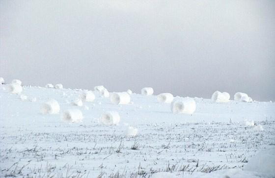 Des rouleaux de neige non humains ? 61644611