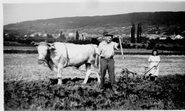 La vie à la campagne autrefois Image111