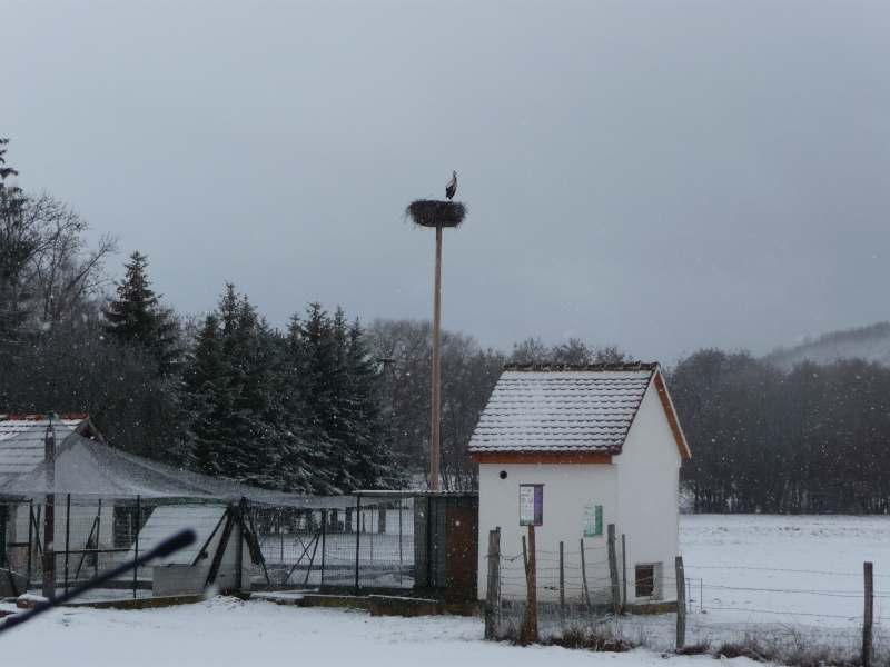 Vive la neige à Wangen ! - Page 3 P1000815