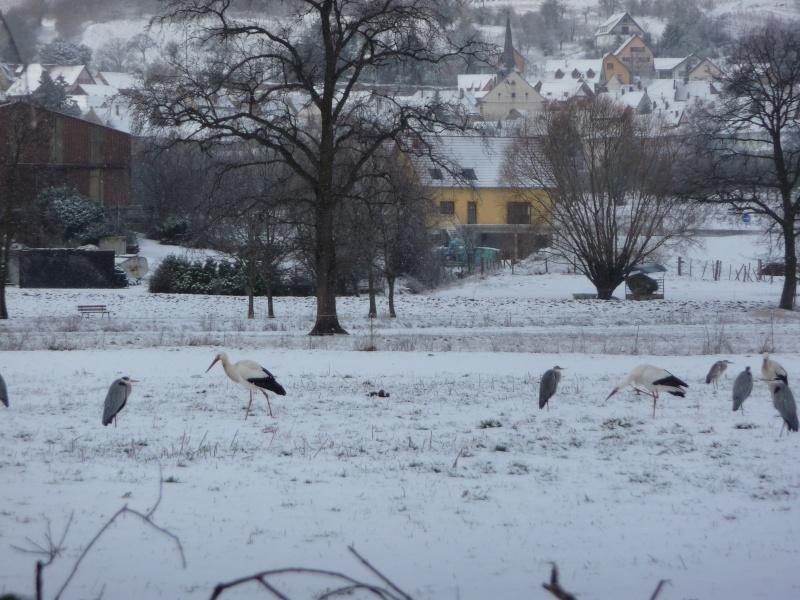 Vive la neige à Wangen ! - Page 3 P1000819