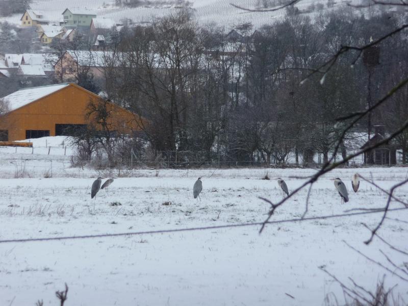 Vive la neige à Wangen ! - Page 3 P1000821