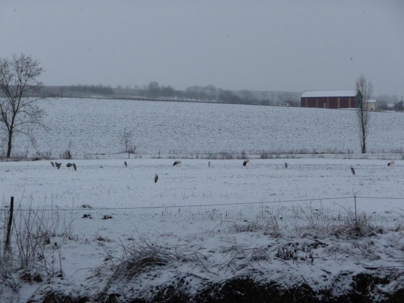 Vive la neige à Wangen ! - Page 3 P1000822