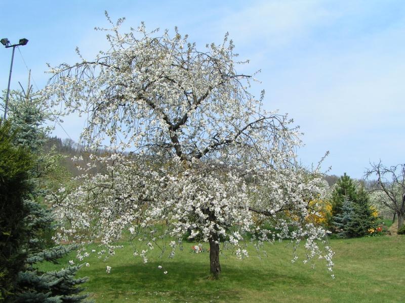 le printemps s'en vient Pict1310