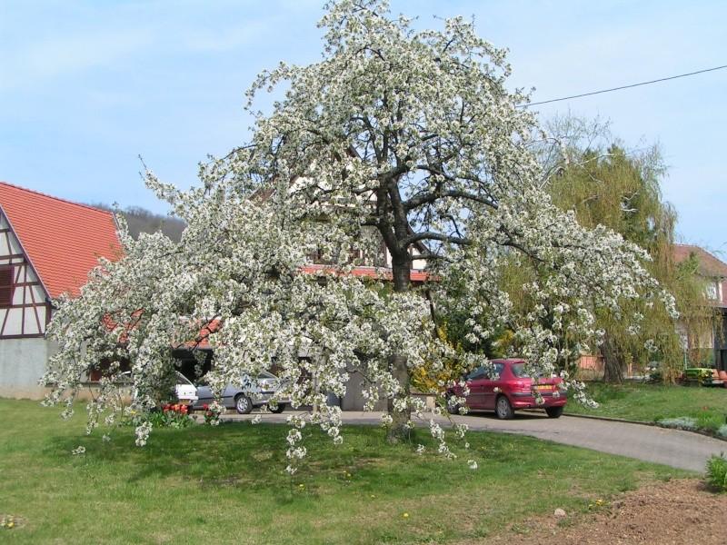 le printemps s'en vient Pict1311