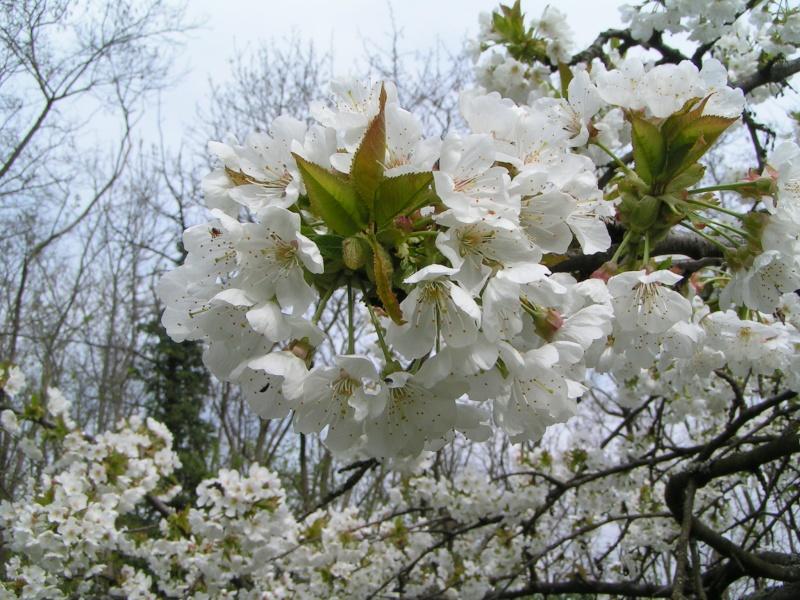 le printemps s'en vient Pict1326