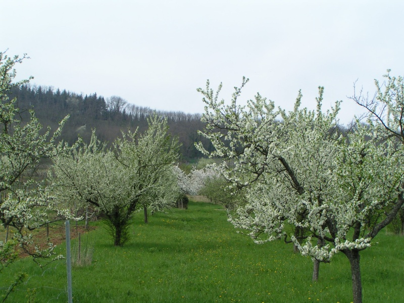 le printemps s'en vient Pict1327