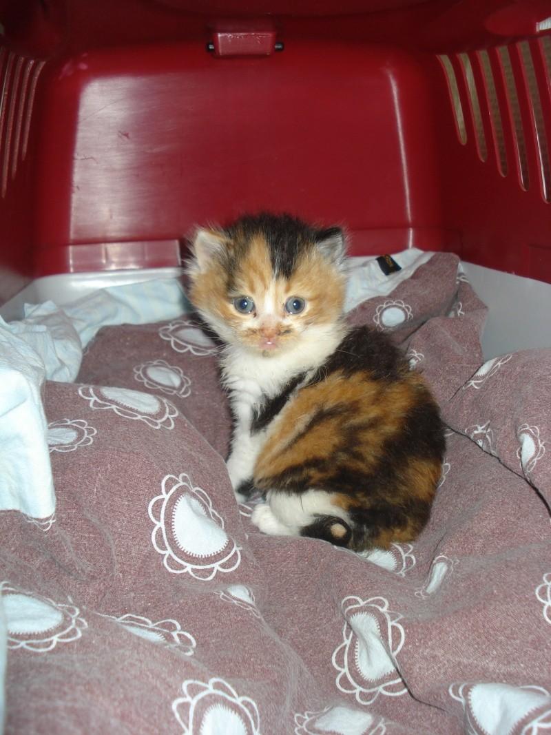 Urgent: besoin dons argents pour stériliser les chats (Aytré 17) Dsc04929