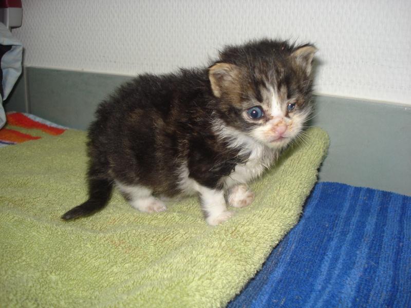 Urgent: besoin dons argents pour stériliser les chats (Aytré 17) Dsc04930