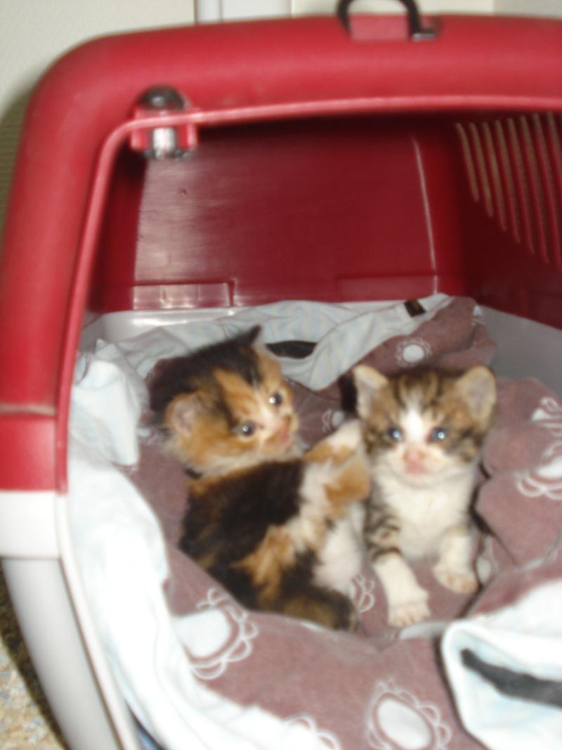 Urgent: besoin dons argents pour stériliser les chats (Aytré 17) Dsc04931