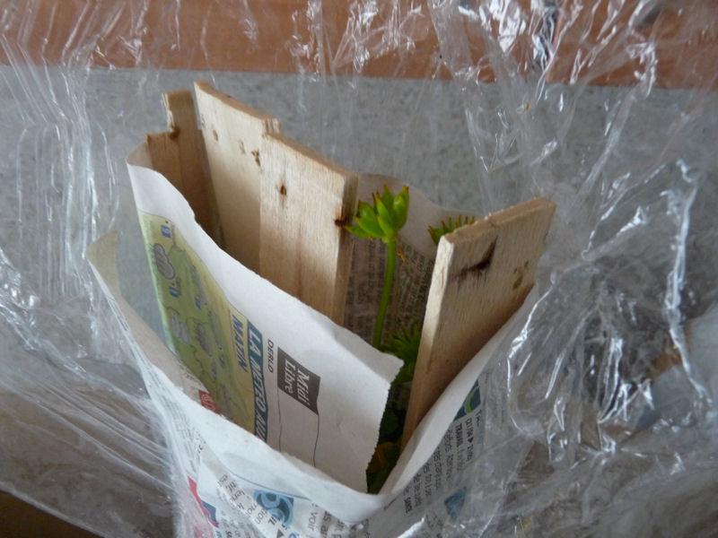 Reception de plantes A410