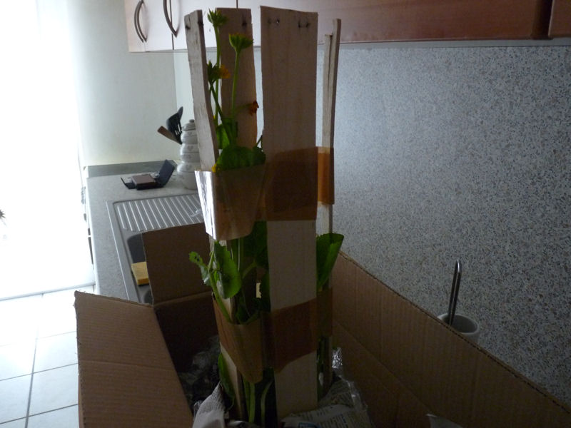 Reception de plantes A710