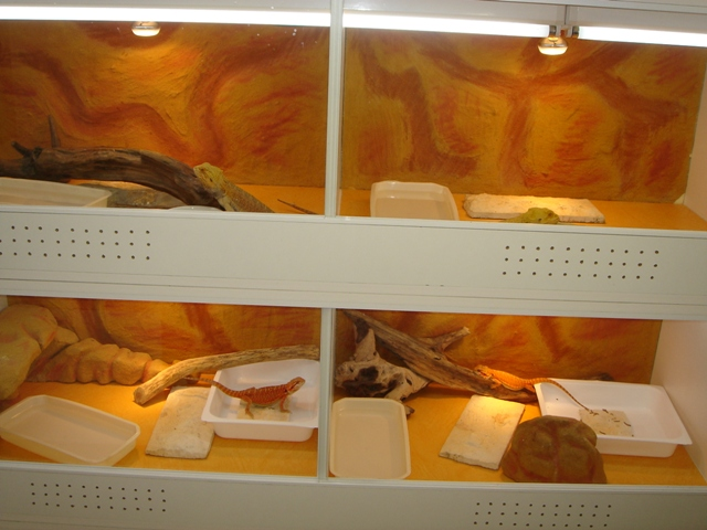Ma nouvelle salle d'élevage en travaux Dsc00080