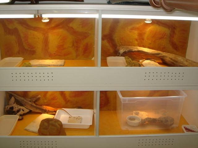 Ma nouvelle salle d'élevage en travaux Dsc00081
