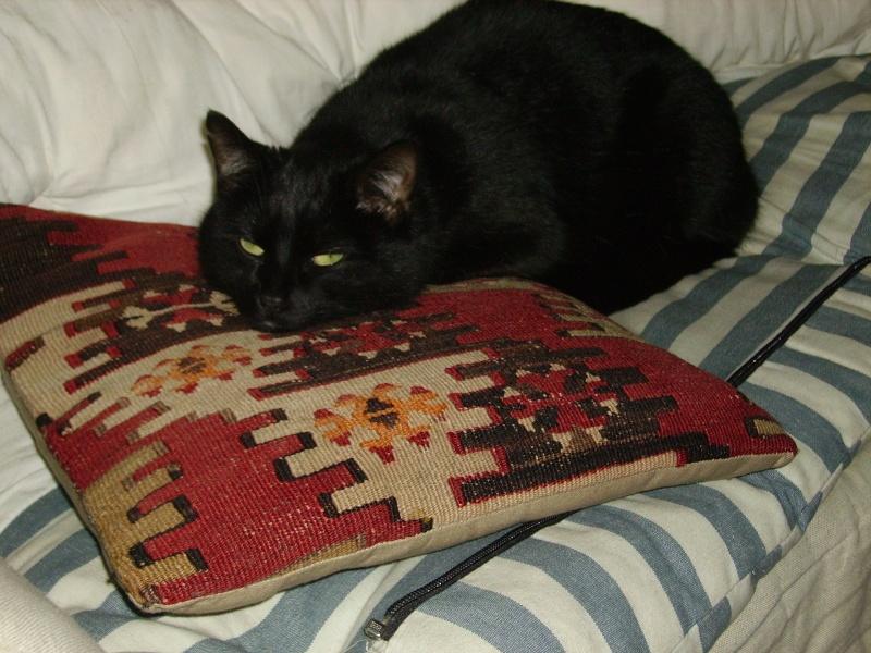 8 août : Journée internarionale du chat — le chat dans toute sa beauté - Page 3 Zouhai17