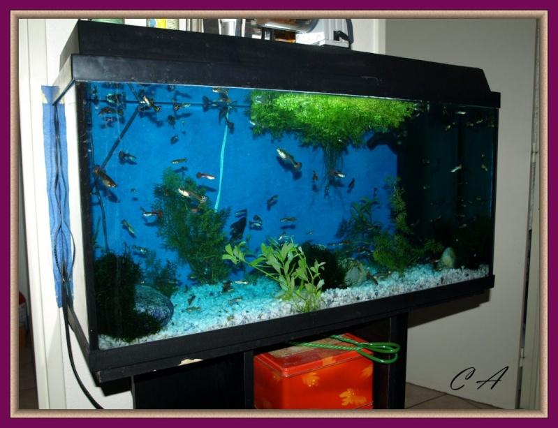 le nouvel aquarium de ma fille  Aqua110